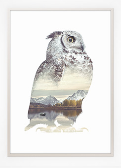 Faunascapes Poster Print Owl