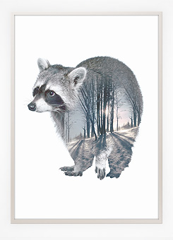 Faunascapes Poster Print Racoon