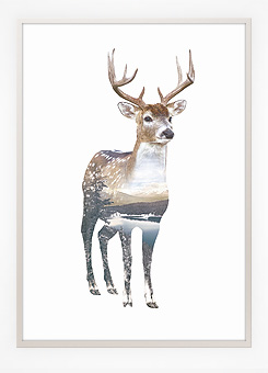 Faunascapes Poster Print Deer