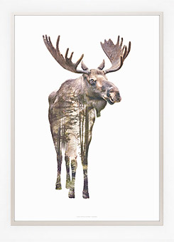 Faunascapes Poster Print Moose