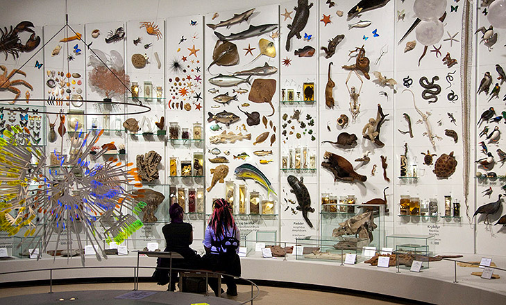 Photo from Zoological Museum in Copenhagen. In front you can see a 3D model of an evolutionary tree. In the background two school-children are sitting on a bench, looking at a panel of taxidermies with fish, toads and monkeys hanging on a big wall. Photo by Jens Astrup from The University of Copenhagen.