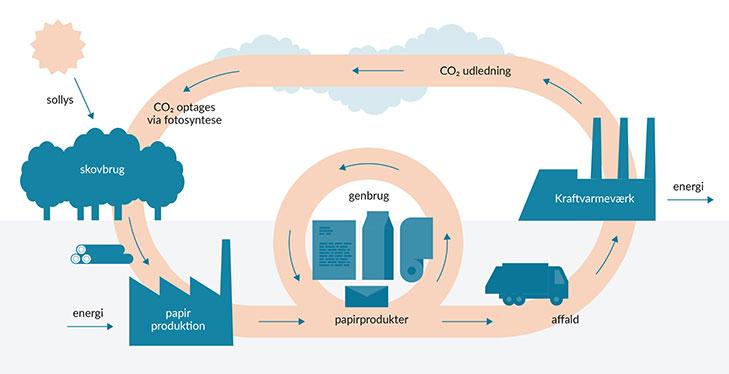 Eksempel på et biomasse kredsløb.
